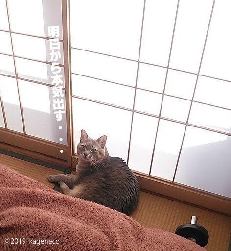 ダンベルを横にくつろぐ猫