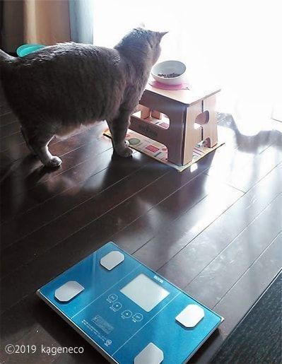 かりかりの入った皿を目の前に食べるか悩む猫