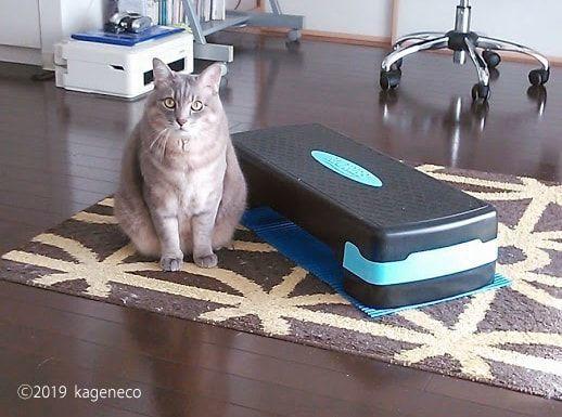 踏み台を横におすましの猫