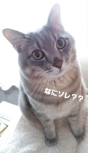 疑いを持っている猫
