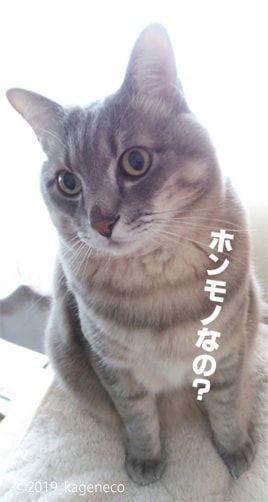 本物なのか疑う猫