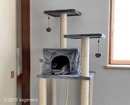 キャットタワー内のおうちでくつろぐ猫