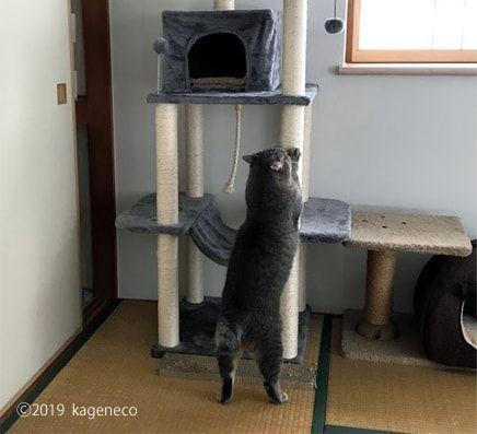 タワーの柱で爪とぎをする猫