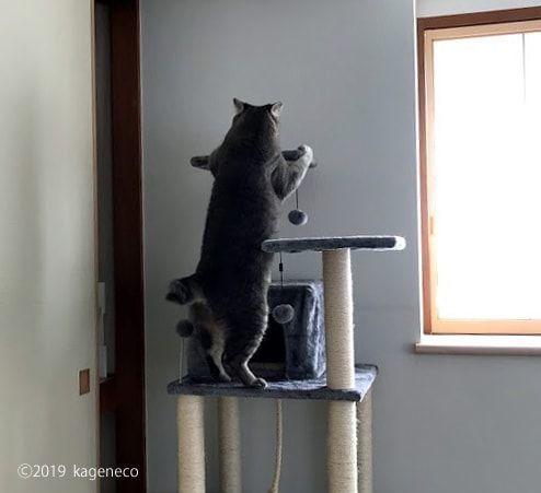 タワーの最上段へ登ろうとする猫