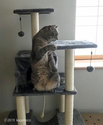 おもしろポーズでキャットタワーへ登る猫