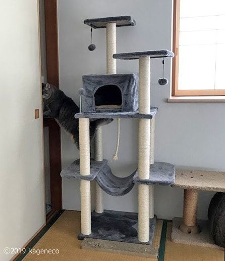 キャットタワーから押入れへ向かう猫