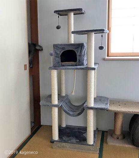 キャットタワーから押入れに入り切る猫