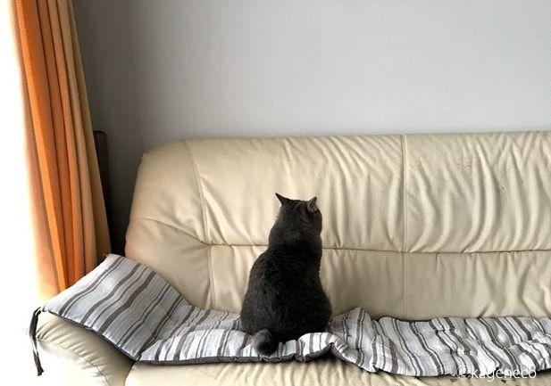 ソファの背もたれに向かって座る猫