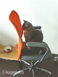 オレンジ色の背もたれに向かって座る猫
