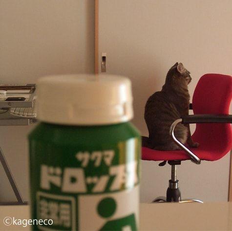 赤い背もたれに向かって座る猫