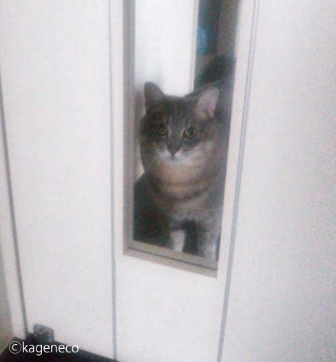 白い扉の外から開けてとうっすら鳴く猫