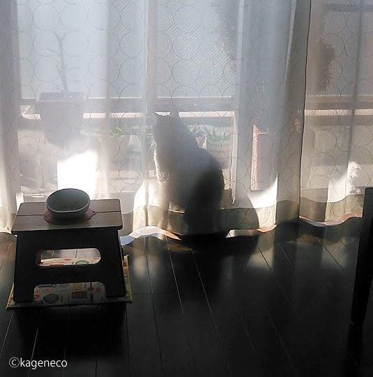窓側から外を眺める猫