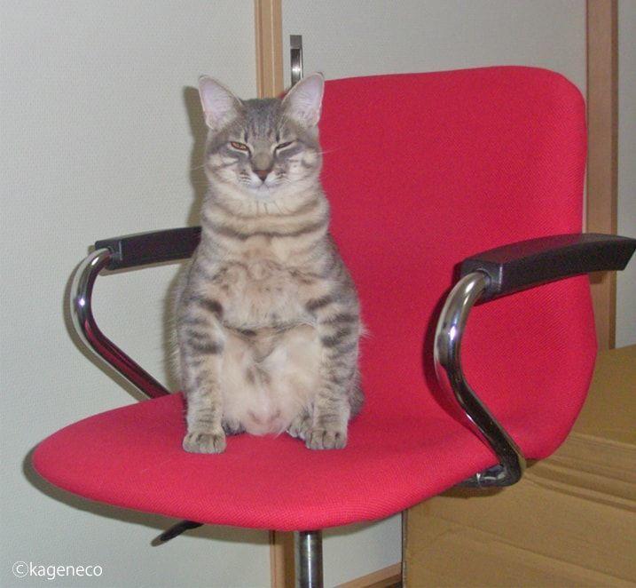 赤い椅子の上で眠気を我慢する猫