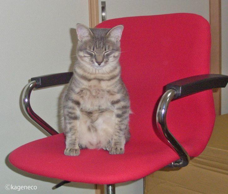 赤い椅子の上で船をこぐ猫