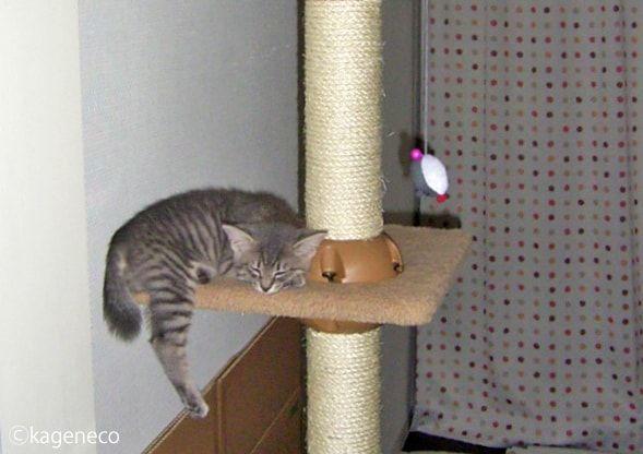 キャットタワーの上で眠る子猫