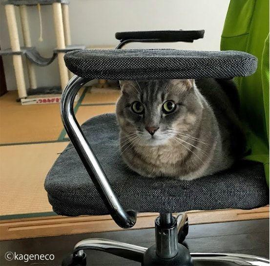 イスの上に座り妨害する猫
