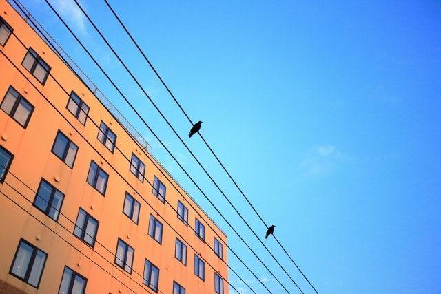 真っ青な空に浮かぶ電線に止まるカラス