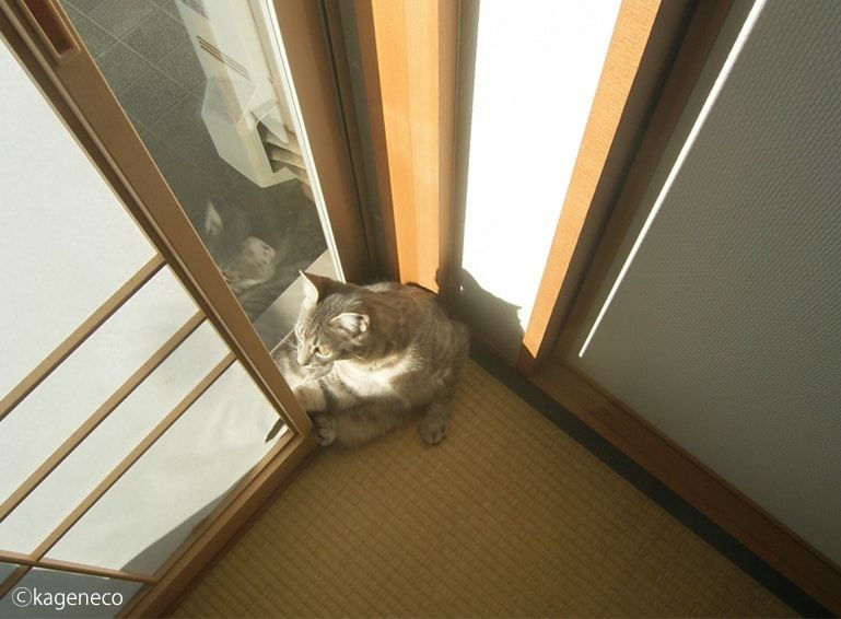 障子に寄りかかかり外を眺める猫