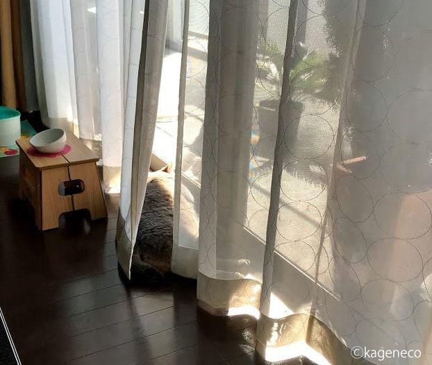気持ち良さそうに窓辺で寝転ぶ猫