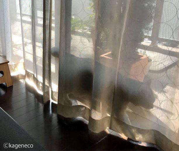 日向ぼっこのベスポジを探す猫
