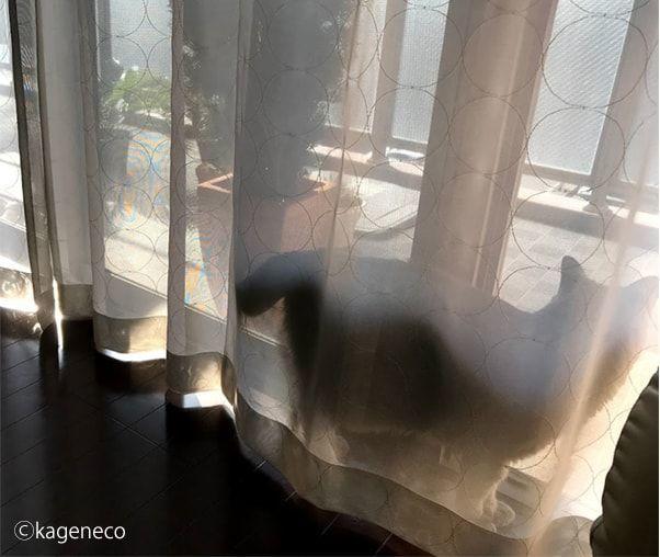 窓辺でのベスポジ探しに入念な猫