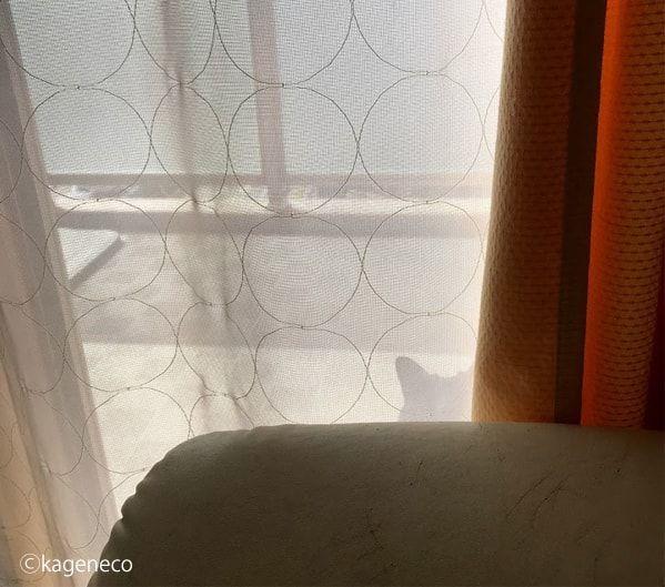 ベスポジを探し続けてついに見つけた猫