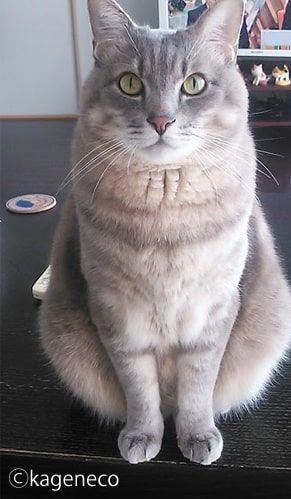 テーブルの上でキリッとしたポーズをする猫