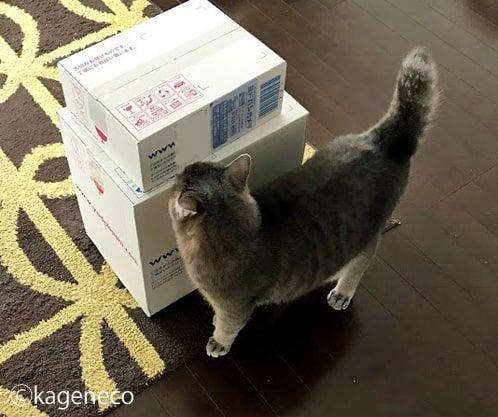 白い箱の匂いを入念に嗅ぐ猫