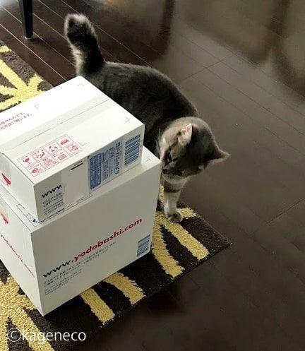 白い箱の匂いを一周嗅いだ猫