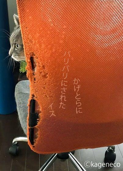 爪でばりばりにされたオレンジ色のイスに座る猫