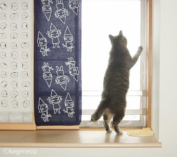 窓の外の雪に興味津々で二本足で立つ猫
