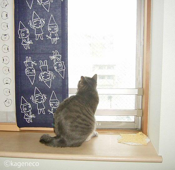 色んな方向から降ってくる雪を眺める猫