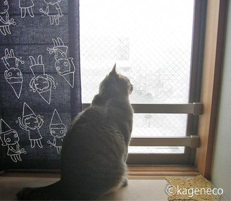 初めての雪を窓からじーっと観察する猫