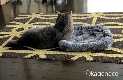 灰色マットの端っこへ寄りかかる猫
