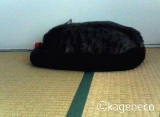 毛色と同色のマットで眠る猫