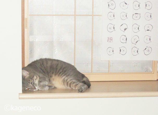 出窓で小さく縮む猫
