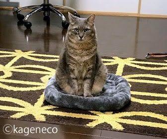 灰色マットの上で不機嫌に座る猫