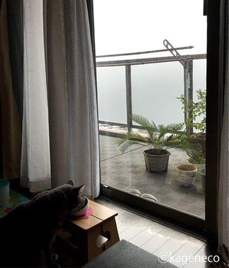 霧が出ている事を気にせずごはんを食べる猫