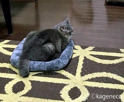 灰色マットの上できっちり収まる猫