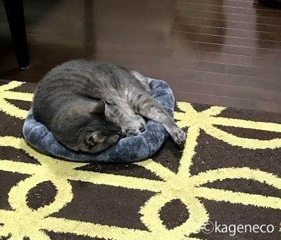 灰色マットの上で足を飛び出させながら眠る猫