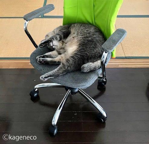 パソコンチェアの上で丸く収まる猫