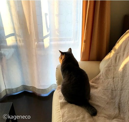 窓から見える夕暮れに思いを馳せる猫