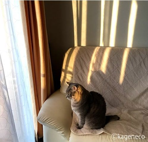 窓から見える夕暮れを見て物思いにふける猫