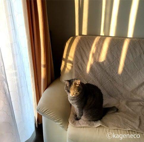 夕暮れを見て思いを馳せていると思ったら眩しかっただけの猫