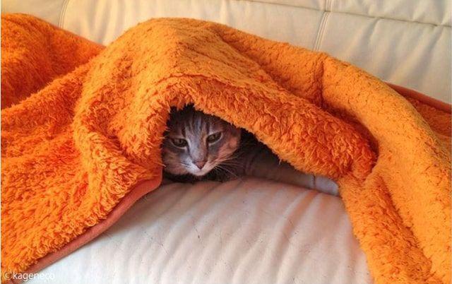 オレンジ色の毛布から顔を覗かせる猫