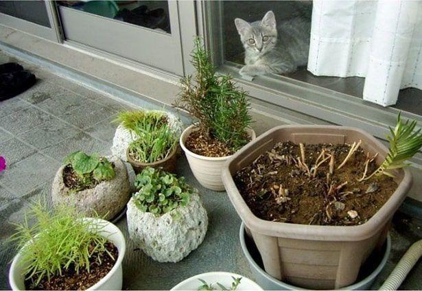 植木を見つめる猫