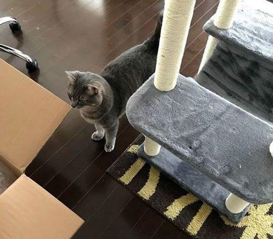 新キャットタワーに興味を示す猫