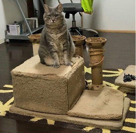 古いキャットタワーに未練のある猫