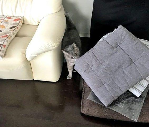 新しいシートクッションの匂いをかぐ猫