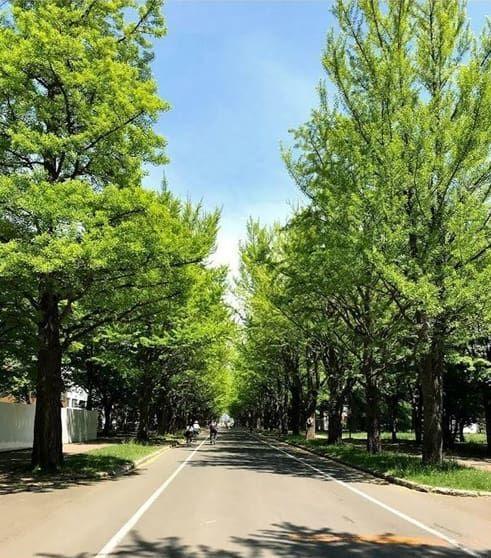 キャンパス内に広がる並木